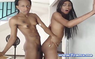Sombre Trannies On Hot Standing Anal Shafting